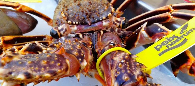 Fira de la llagosta, la gamba i el peix d'Eivissa